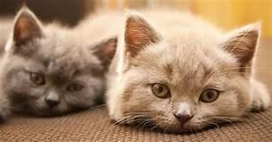 Feline Inflammatory Bowel Disease  Nature And Treatment