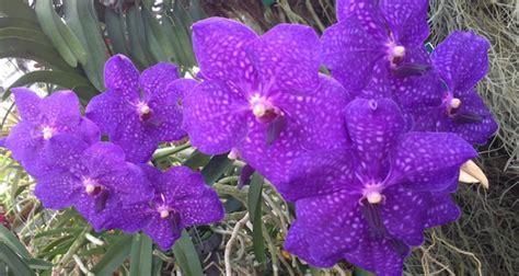 Garten Kaufen Linz by Besuch Im Orchideenhaus Botanischer Garten Linz