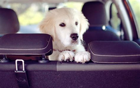 Bow-OW! Do You Need Car Insurance for Your Pet? - Quoted