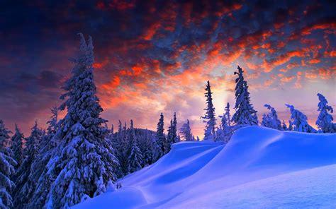 snow landscape trees wallpapers hd desktop  mobile