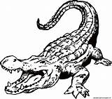 Alligator Clip Coloring Pages Printable Source sketch template