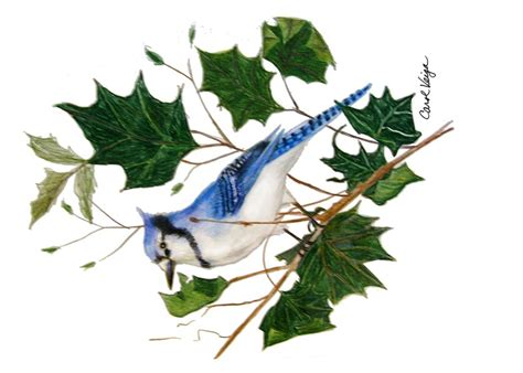 bird colored pencil drawings  behance