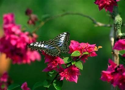 Flowers Butterfly Flower Natural Butterflies Nature Desktop