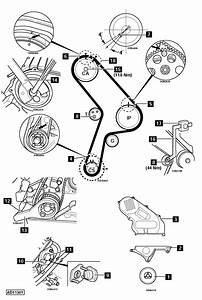 Fiat Timing Belt