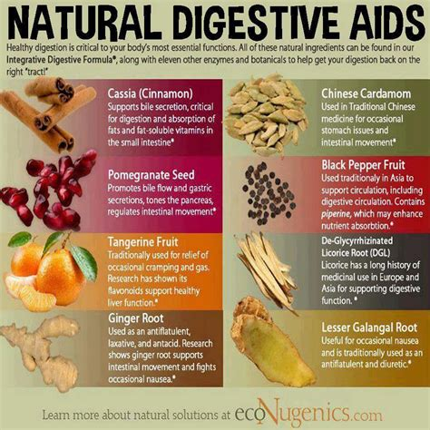 cuisine aid digestive aids potions and remedies