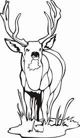 Coloring Mule Deer Pages Quick Printable Getcolorings Sheet sketch template