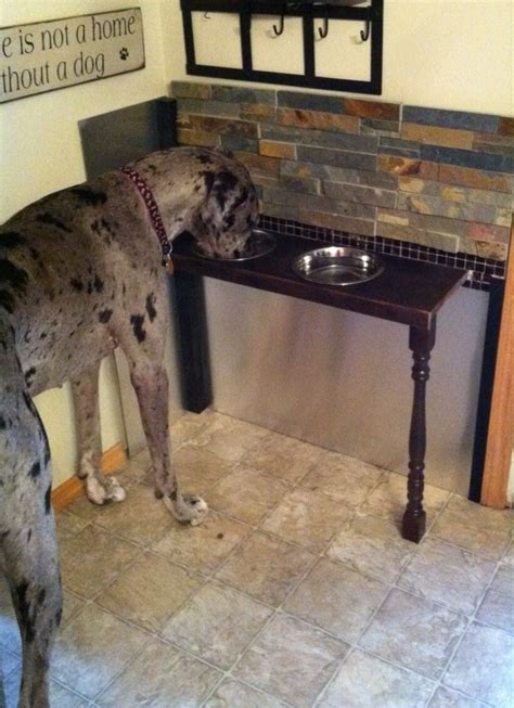 tile stainless backsplash   elevated set  dog