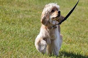 Canine Esophageal Neoplasms Esophageal