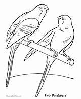 Desenhos Parakeet Coloring Colorir Animais Pintar Domesticos Periquitos Ausmalbilder Haustiere Desenho Papagei Pet Imprimir Coloridos Malvorlagen Ausmalbild Konabeun Birds Colorear sketch template