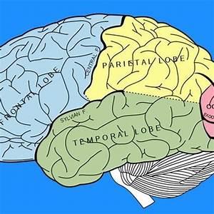 Left Brain  U0026 Right Brain Exercises