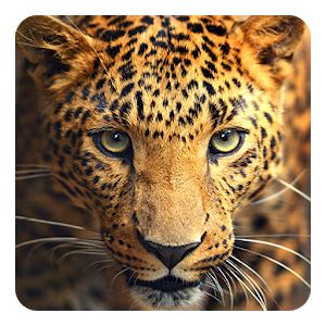 3d Live Wallpaper Animals - animals live wallpaper android apps on play