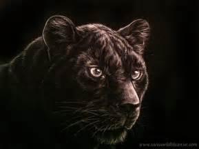 Black Panther Face Drawing