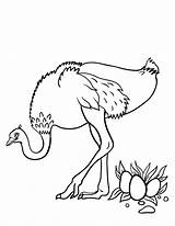 Ostrich Coloring Pages Printable Eggs Coloringcafe Sheet Animal Ostriches Drawing Outline Egg Animals Pdf Wood Draw Birds Easy Adult Sheets sketch template