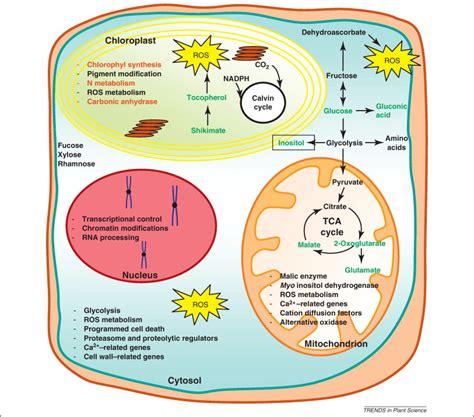 leveraging metabolomics  functional investigations