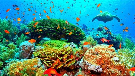 Petition · Steven Miles: Save the Great Barrier Reef from industrial-scale experiments · Change.org