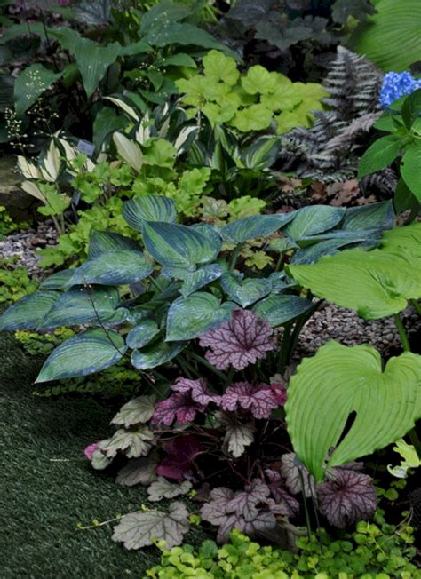 My Favorite Plant Combinations 37 (my Favorite Plant