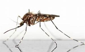 zika nederland