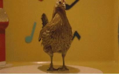 Vogelgrippe Pierre Chicken Dance Noktara Angst Ansteckend