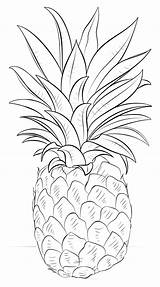 Pineapple Coloring Fruits sketch template