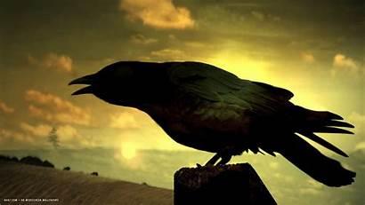 Raven Bird Sunset Singing Birds Widescreen Backgrounds