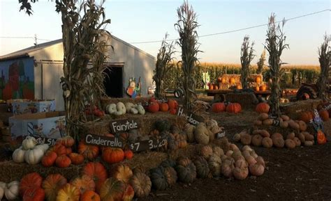 Fresno Pumpkin Patch by Blog Archives Fileswith