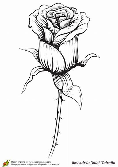Tattoo Rose Drawing Rouge Pages Coloring Flowers