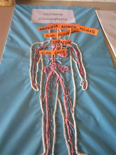 best images about tablero aparato circulatorio pinterest homeschool respiratory system