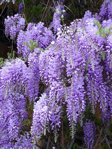 Top 10 Unusual Fragrant Plants And Herbs To Grow In Your