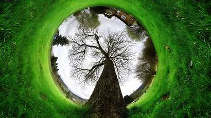 Amazing Wallpapers Nature Tree Desktop Mobile Android