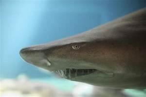 New York Aquarium breaks ground on new $127M shark exhibit ...
