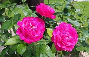 Blumen Für Garten : blumen f r den garten bestellen blumen dekoration ideen ~ Frokenaadalensverden.com Haus und Dekorationen