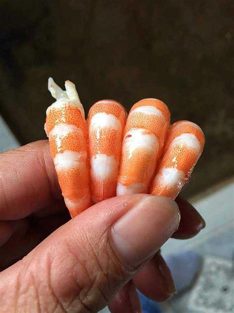 shrimp benefits december january posted
