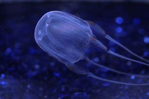 Integrating the Arts with Marine Invertebrates: March 2012