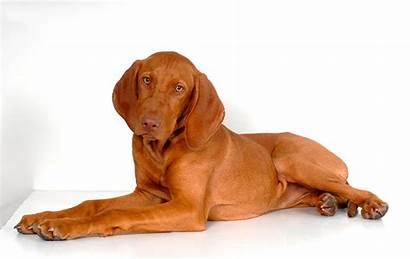 Dog Breeds Friendly Families Children Housekeeping Insure