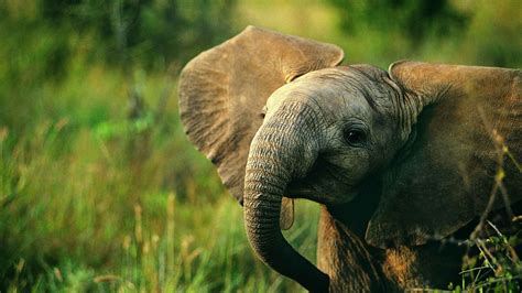 Animal Wallpapers Free - 60 beautiful and animal wallpapers