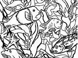 Kelp Forest Drawing Monterey Bay Aquarium Getdrawings Coloring sketch template