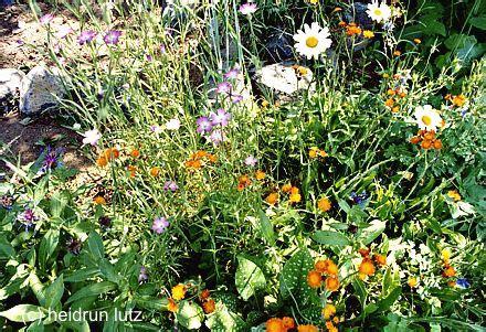 wie lege ich einen naturgarten an gardening wildblumenwiese naturgarten und wildbienen