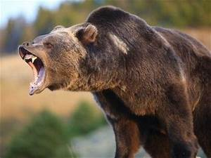 side profile of a bear face - Google Search | PD9- 3D Wire ...