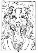 Malvorlage Herdershond Colley Edupics Colouring Hunde Educima Schoolplaten sketch template