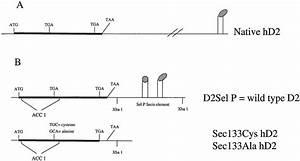 Htc Hd2 Schematic Diagram