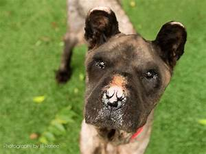 Neglected Dog Without a Nose Gets Dramatic Transformation ...