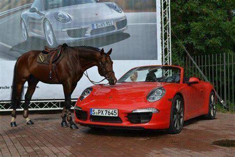 vs ferrari horse thoroughbred tb horses comparison gate racing nice mph equineink