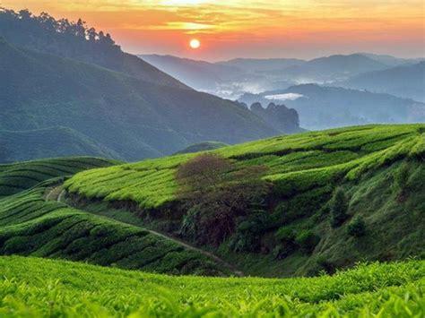 Cameron Highlands Grand Adventure | Malaysia | Adventoro