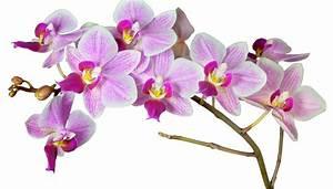 Schöne Orchideen Bilder : orchideen foto bild pflanzen pilze flechten bl ten kleinpflanzen orchideen bilder ~ Orissabook.com Haus und Dekorationen