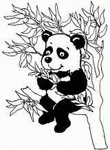 Panda Coloring Bamboo Tree Colouring Eating Clipart Leaves Pandas Popular Library sketch template