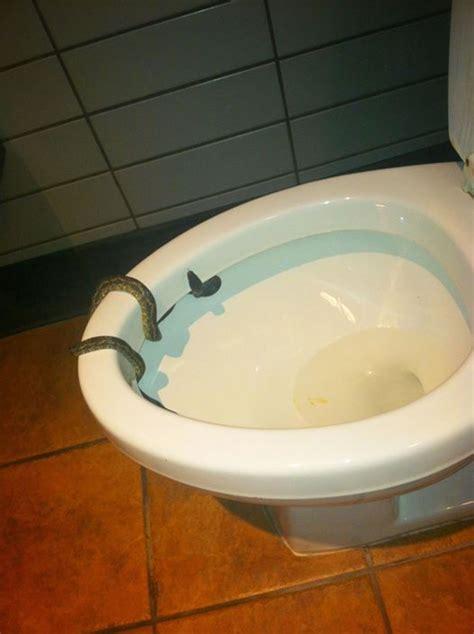 snake  starbucks bathroom bruce ahlswede texas man