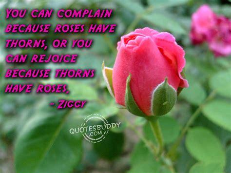 quotes  rose flower  quotes