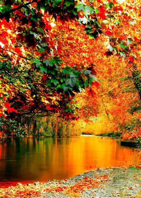 amazing pictures  autumn idyll part