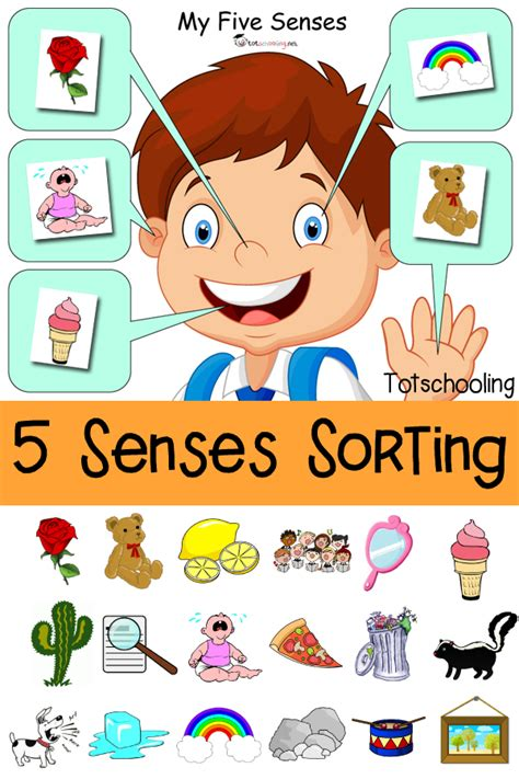 five senses sorting printable totschooling toddler 659 | 5%2BSenses%2BSorting%2BPrintable pin