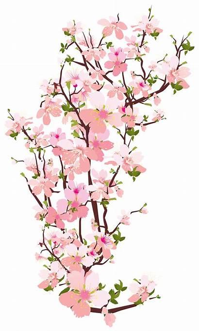 Clipart Magnolia Branch Transparent Tree Spring Flower